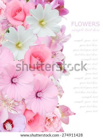 Flowers background with roses isolated on white with sample text - stock photo
