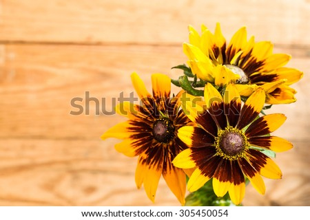 Flowers backgrounds. Summer flowers bouquet of rudbekia on wood background with shallow depth of field useful as greeting card or birthday card. - stock photo