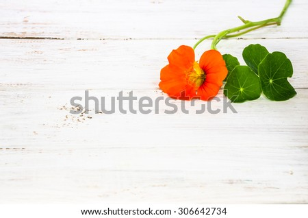Flowers backgrounds with flower of nasturtium isolated on white wood background useful as greeting card,wedding invitation, mothers day or invitations card. - stock photo