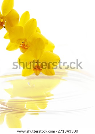 Flowers beautiful yellow orchid phalaenopsis unusual reflected in the water on a white background, isolated. Aromatherapy Spa - stock photo