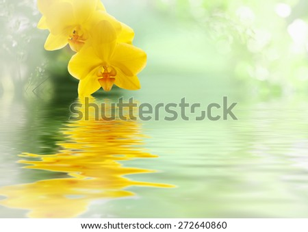 Flowers beautiful yellow orchid phalaenopsis unusual swimming in the water. Aromatherapy, relaxation for the spa - stock photo