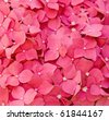 Flowers Beauty - stock photo