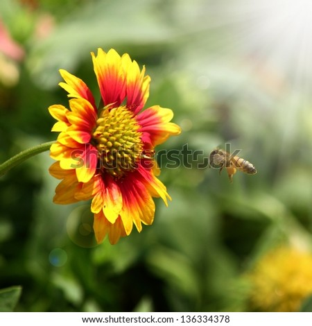 flowers, bees and sun light in garden - stock photo