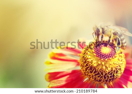 Flowers, bees and sun light in garden. - stock photo