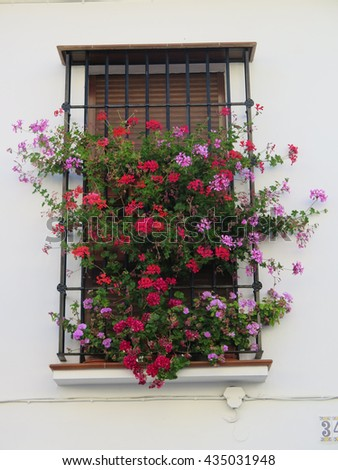 Flowers behind Wrought Iron Grill or bars on Window in Alora Andalusia