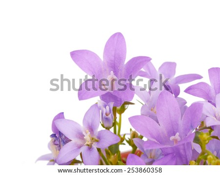 Flowers bells isolated on white background - stock photo