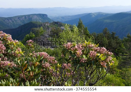Flowers Bloom on Table Rock Mountain, Blue Ridge Mountains, North Carolina - stock photo