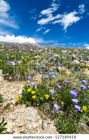 Flowers blooming in a Colorado Mountain Summer Landscape - stock photo