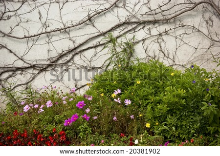 Flowers blooming in front of a wall with faded twines