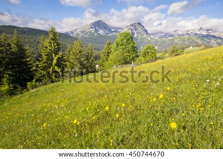 Flowers blooming on a mountain meadow, Durmitor, Montenegro