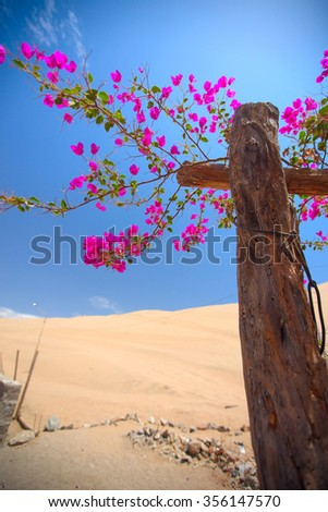 Flowers blossomed in an oasis in the desert among the dunes. - stock photo