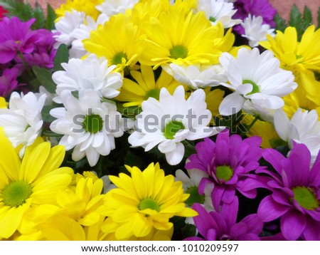 flowers bouquet of daisies of different color