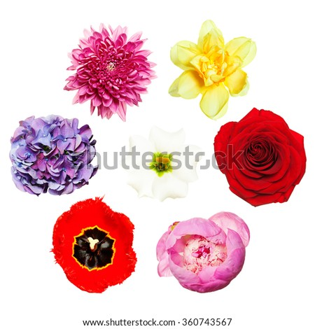 Flowers. Bright Colorful Set of Flowers. Top View