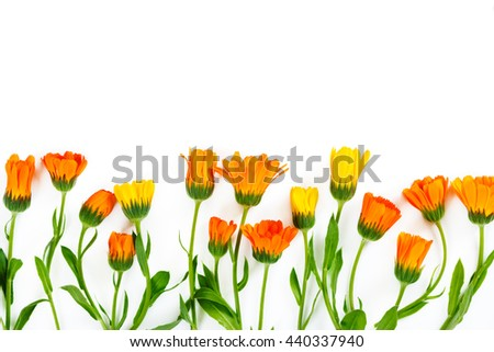 Flowers calendula on white background. Flat lay. Top view.