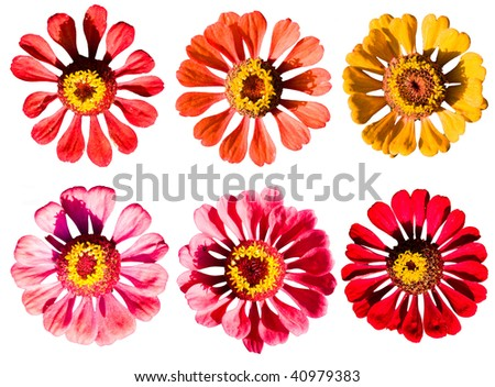 flowers collection isolated on white
