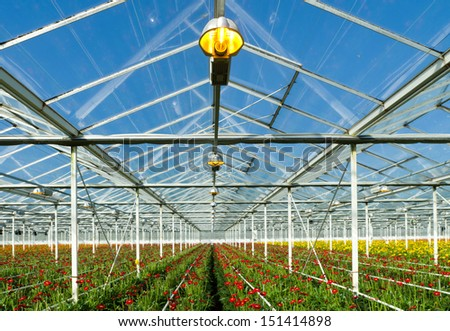 flowers cultivated in a large commercial greenhouse - stock photo