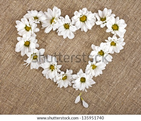 Flowers daisy shape heart on a canvas background , valentines day card concept - stock photo