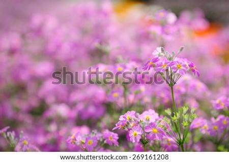 Flowers field - stock photo