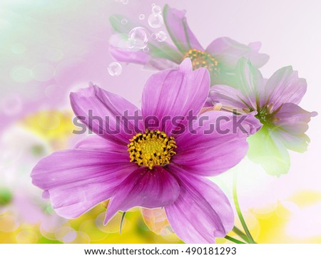 Flowers.Floral background