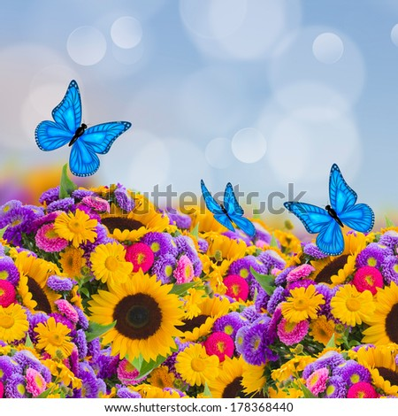 flowers garden with sunflowers, asters and butterflies - stock photo