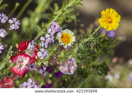 Flowers in a garden in closeup, macro. Colorful flowers in bright sunshine.  - stock photo