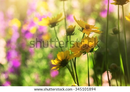 flowers in a garden, sunny summer day - stock photo
