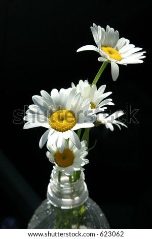 Flowers in a plastic bottle - stock photo