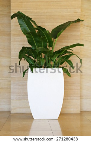 Flowers in a pot - stock photo