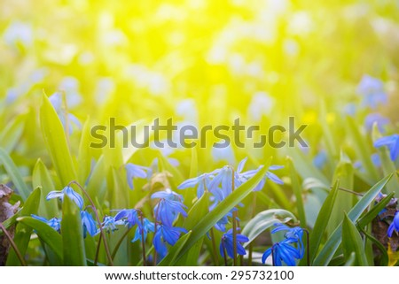 flowers in a rays of sun - stock photo