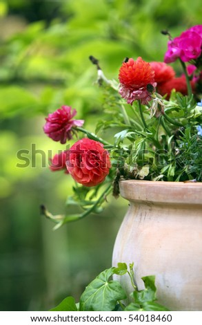 flowers in a terracotta flowerpot - stock photo