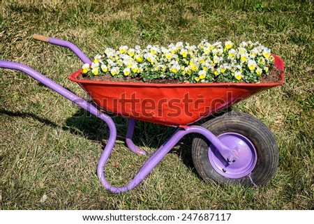 flowers in an old cart at a meadow