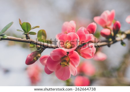 Flowers in bloom, hipster style version - stock photo