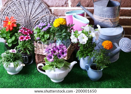 Flowers in  decorative pots and garden tools on green grass background