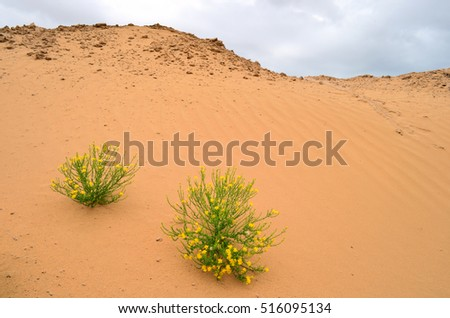 Flowers in desert