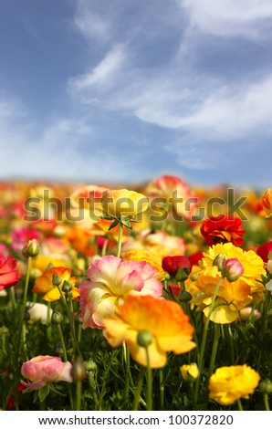 flowers in fied against blue sky