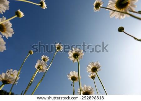 Flowers in field - stock photo
