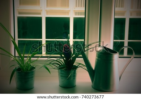 flowers on a ledge hand on ledge stock images royalty free images vectors