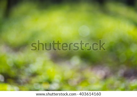 Flowers in grass. Soft focus. Natural background - stock photo
