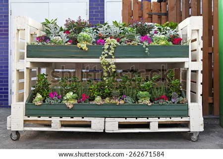 Flowers in mobile shelf made from pallet - stock photo