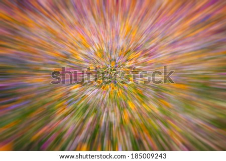 flowers in motion blur background ,floral background