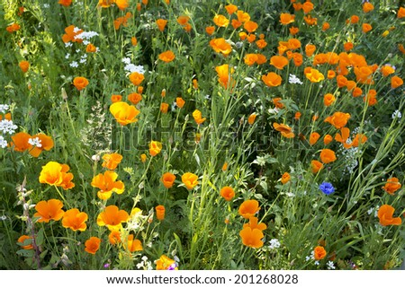 Flowers in nature -wild colourful meadow as background or texture - stock photo
