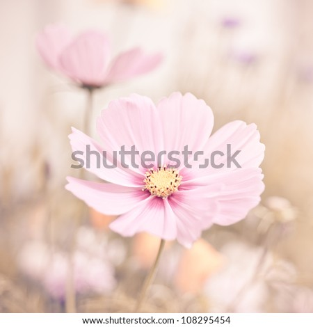 Flowers in pastel colors - stock photo