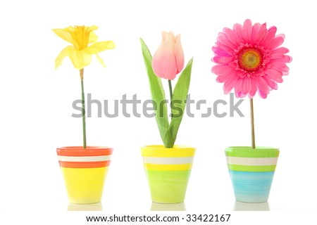 flowers in pot isolated on white background - stock photo