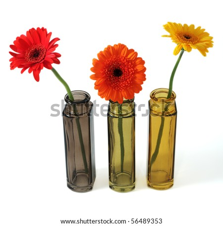 flowers in small bowls isolated on white background