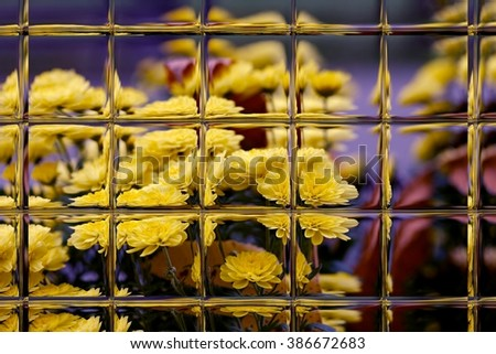 flowers in spring through window panes