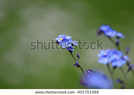 Flowers in spring with beautiful bokeh. local focus