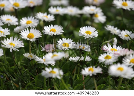 Flowers in spring with beautiful bokeh. local focus, open aperture, shallow depth of fild
