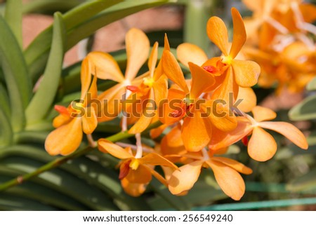 Flowers in the botanical garden - stock photo