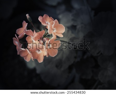 Flowers in the design of natural dark tones. - stock photo
