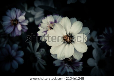 Flowers in the design of natural dark tones. The image is the art - stock photo